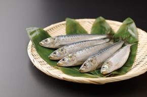大トロいわし(北海道十勝産) 1尾(150-170g)