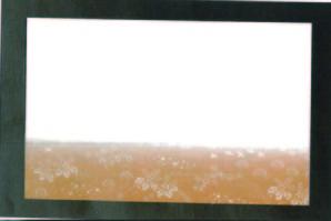 尺三まっと華かすみ 花鳥 (SAK-02) 100枚入【12月より価格変更】